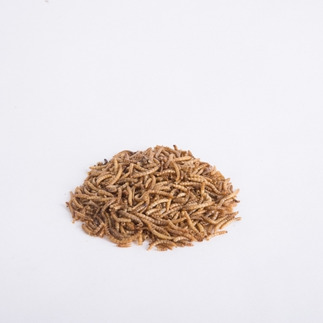 Picture of Dried Meal Worms
