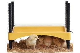 Picture of Brinsea EcoGlow Safety 600 Chick Brooder