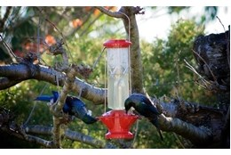 Picture of Wild Bird Nectar Nutra Feeder