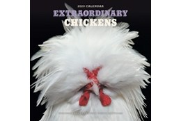 Picture of Extraordinary Chickens 2020 Wall Calendar
