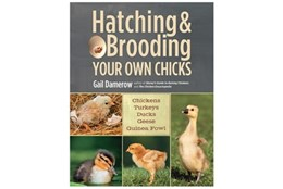 Picture of Hatching & brooding your own chicks